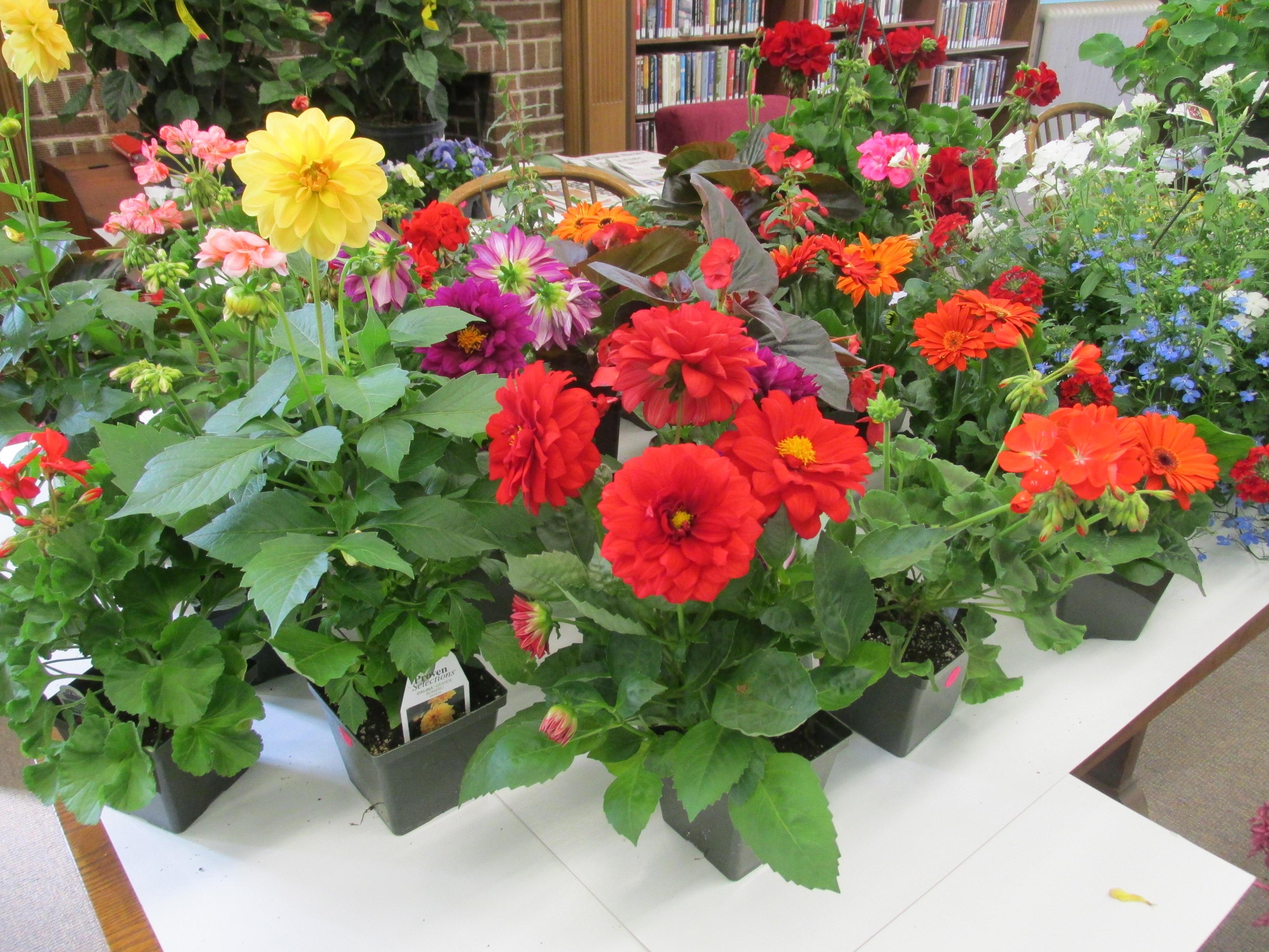 Lovely Flower Plants for Sale
